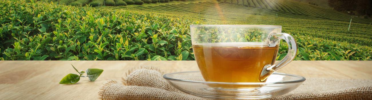 Herbata czarna sante